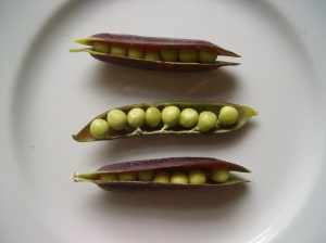 Can you tell I was so proud of my purple podded peas!  They didn't taste as good as mangetout, but the peas were nice inside.