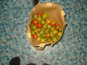 what's left of the tomatoes