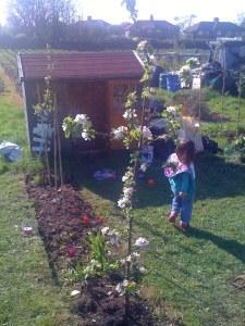 Apple blossom in the girls' plot