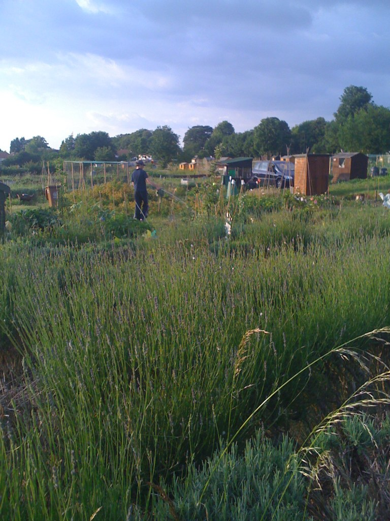 Allotment June 15 017