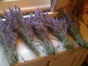 Lavender day